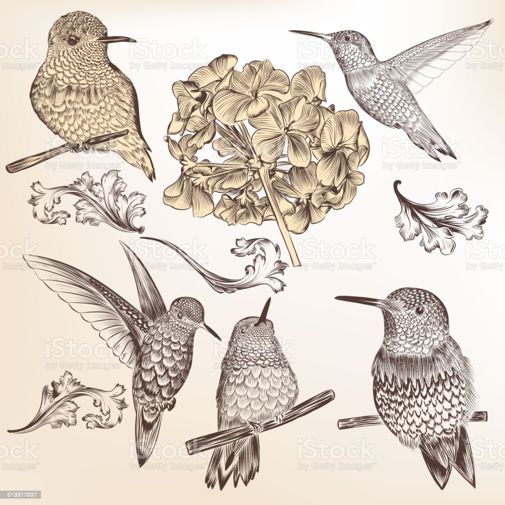 Collection of vector hand drawn humming birds for design vector art illustration