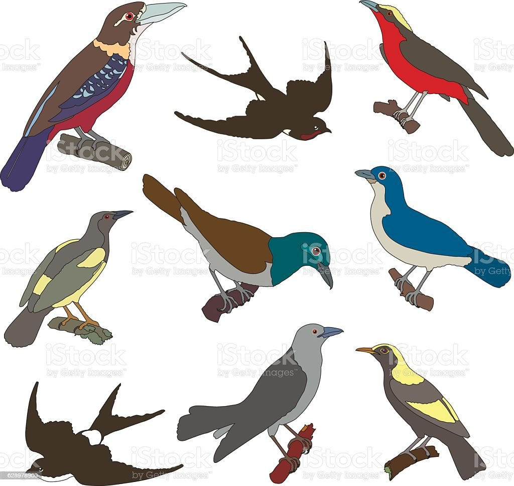 Collection of vector images of american birds vector art illustration