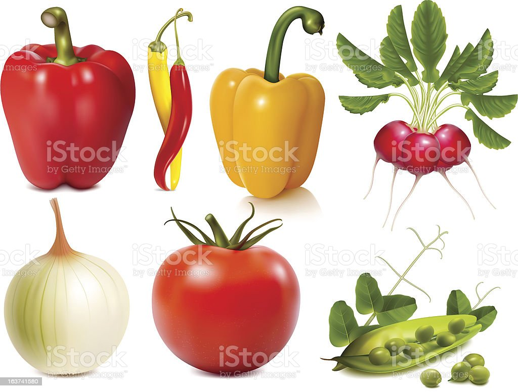 Collection of vector vegetables royalty-free stock vector art