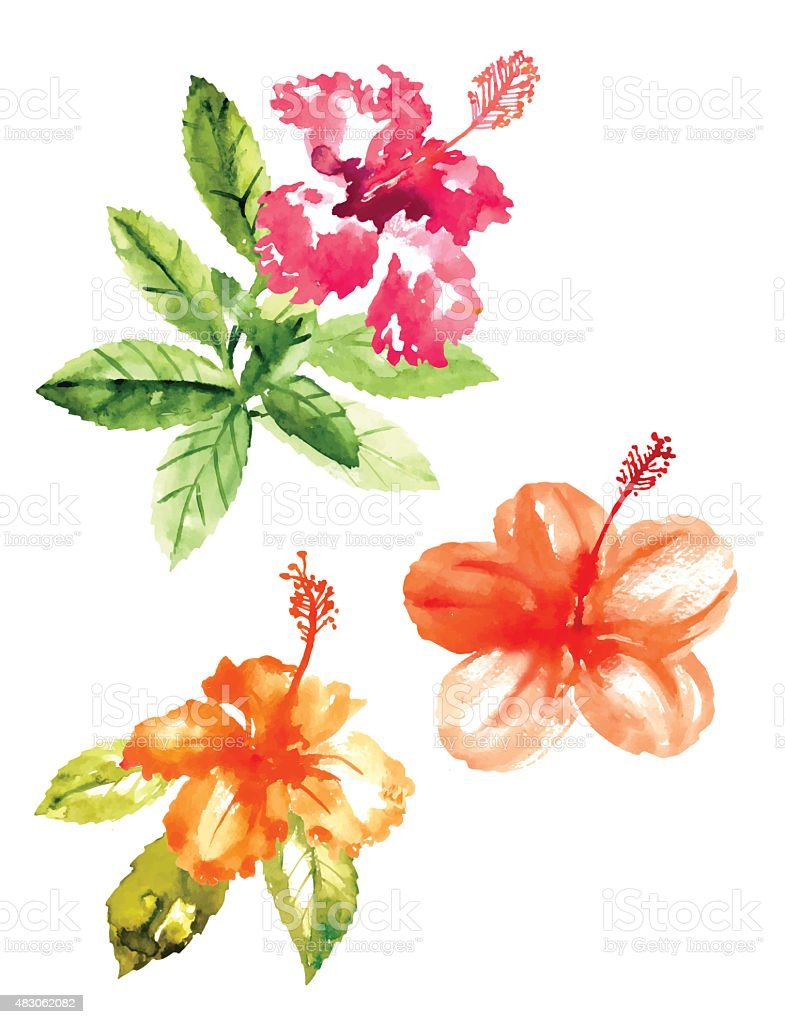 collection of watercolor hibiscus flowers stock vector art