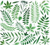collection painted watercolors of plants and leaves. vector illustration