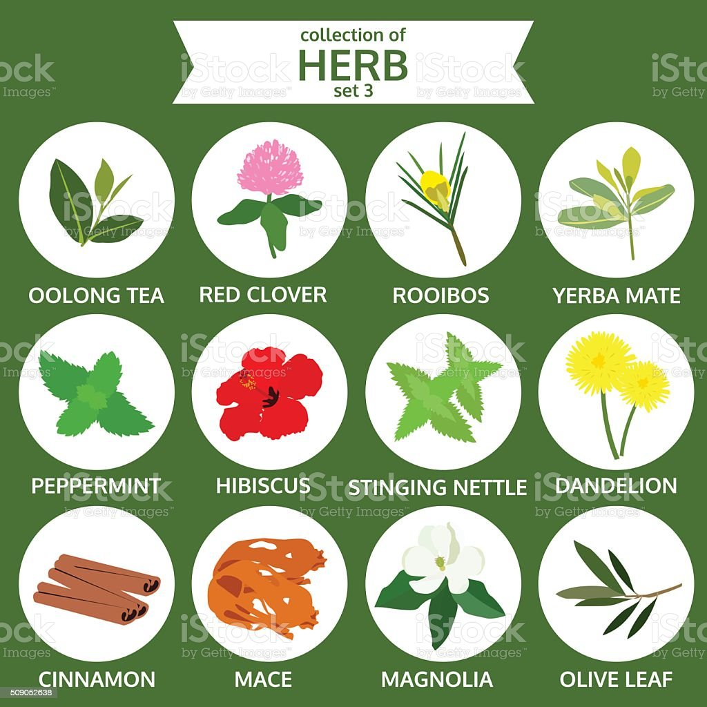 collections of herb, food vector illustration, flat icon sticker vector art illustration