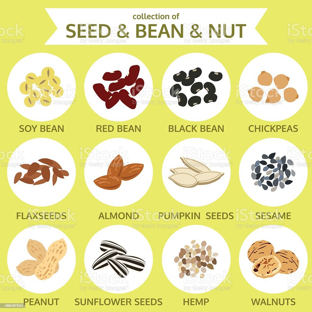 collections of seed & bean & nut, food icon vector illustration vector art illustration