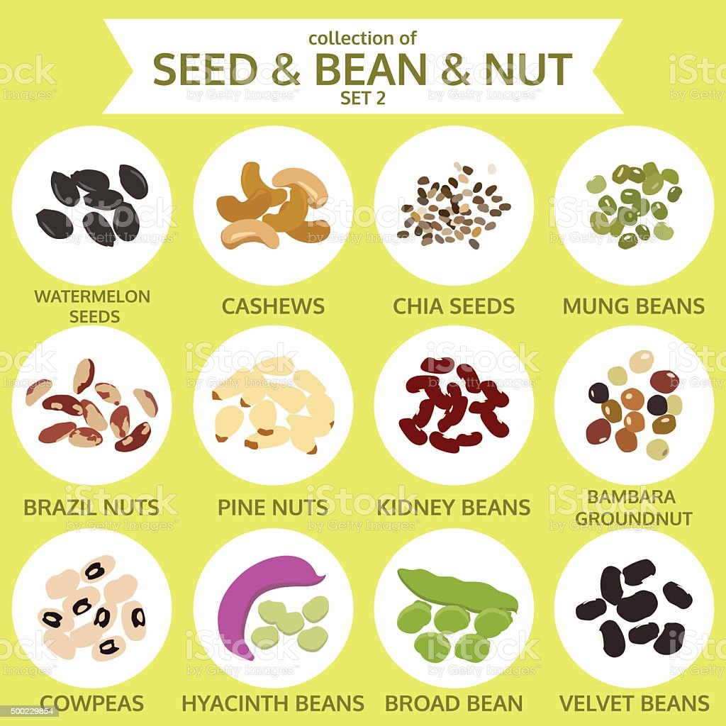 collections of seed & bean & nut set two, food, vector vector art illustration