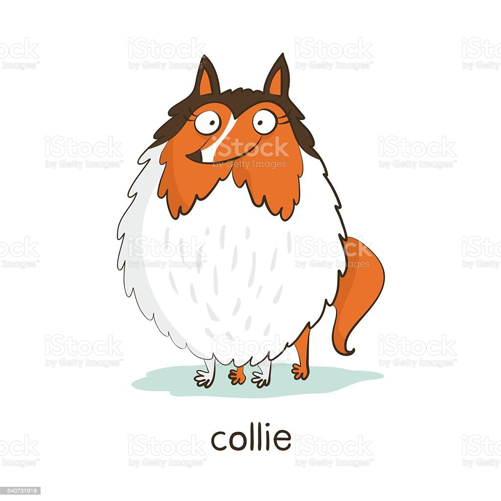 Collie. Dog character isolated on white vector art illustration