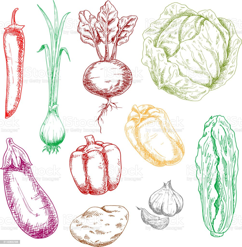 Color farm and garden vegetables sketches vector art illustration