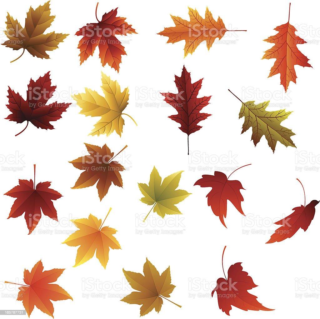 Color full Autumn Leaves vector art illustration