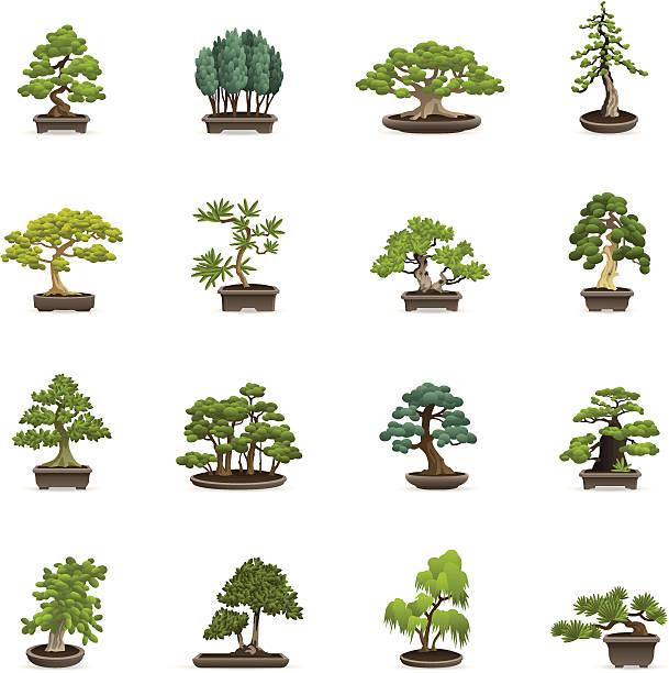 Bonsai Tree Clip Art, Vector Images & Illustrations - iStock
