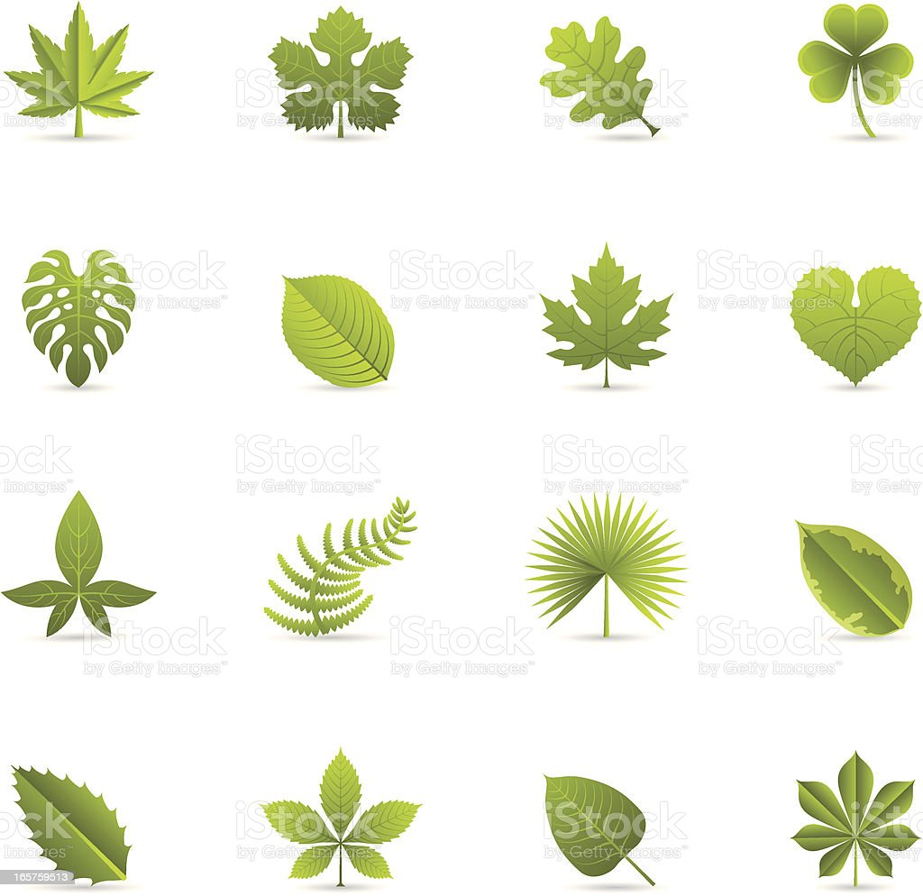 Color Icons - Leaves vector art illustration