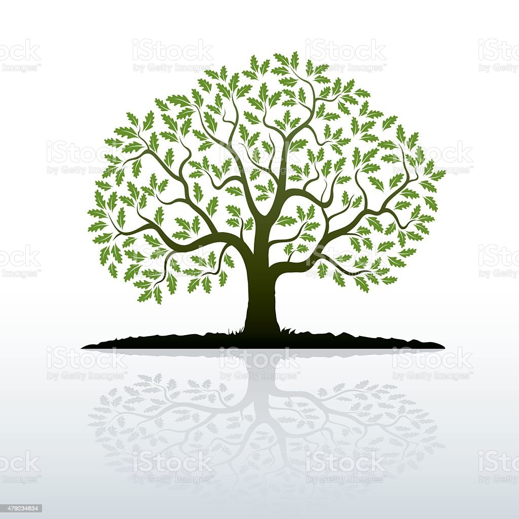 Color Oak Tree vector art illustration