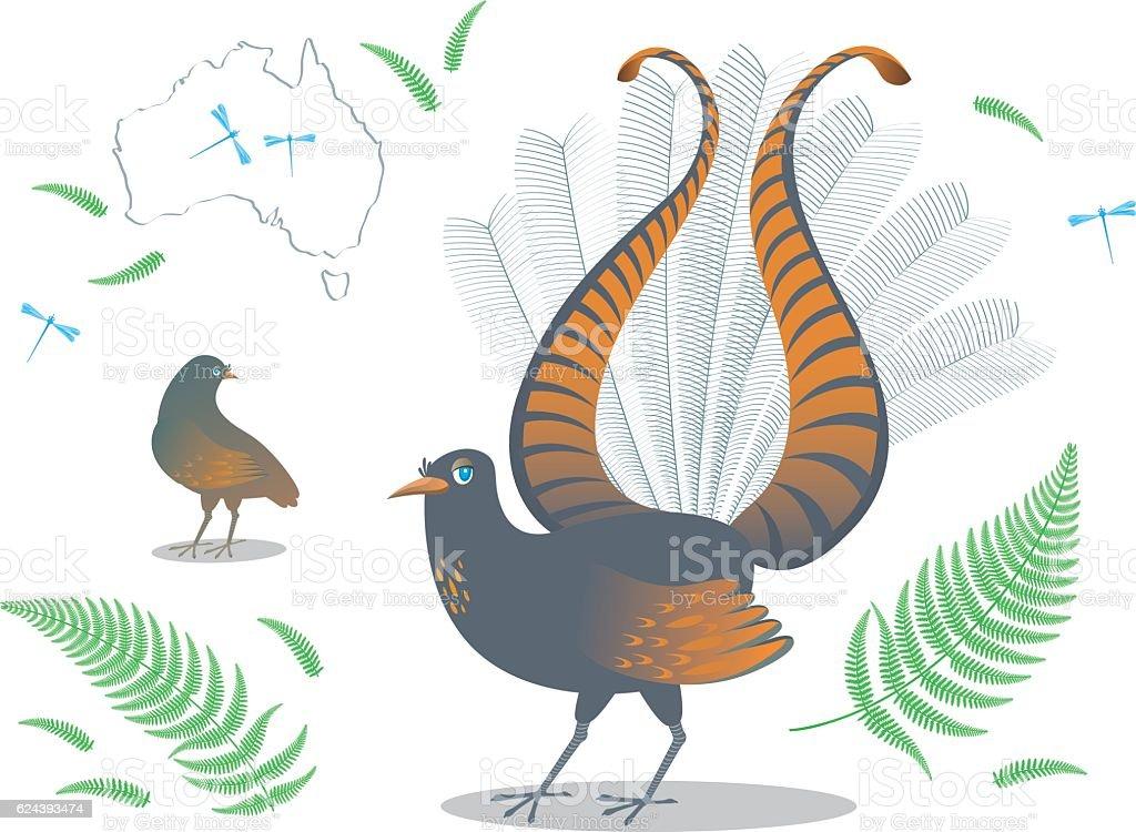 Color vector illustration Lyrebird bird, silhouette of Australia and fern. vector art illustration