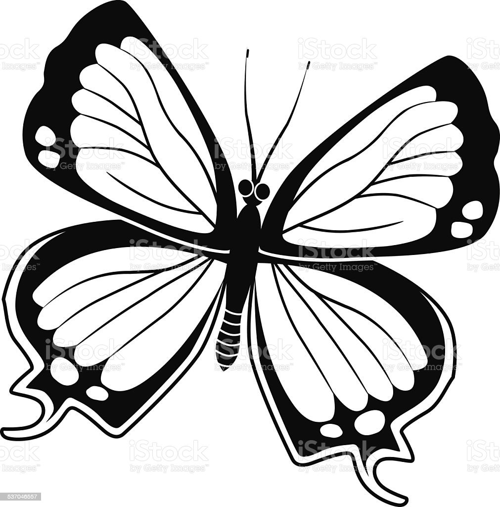 Colorado hairstreak North American butterfly in black and white vector art illustration
