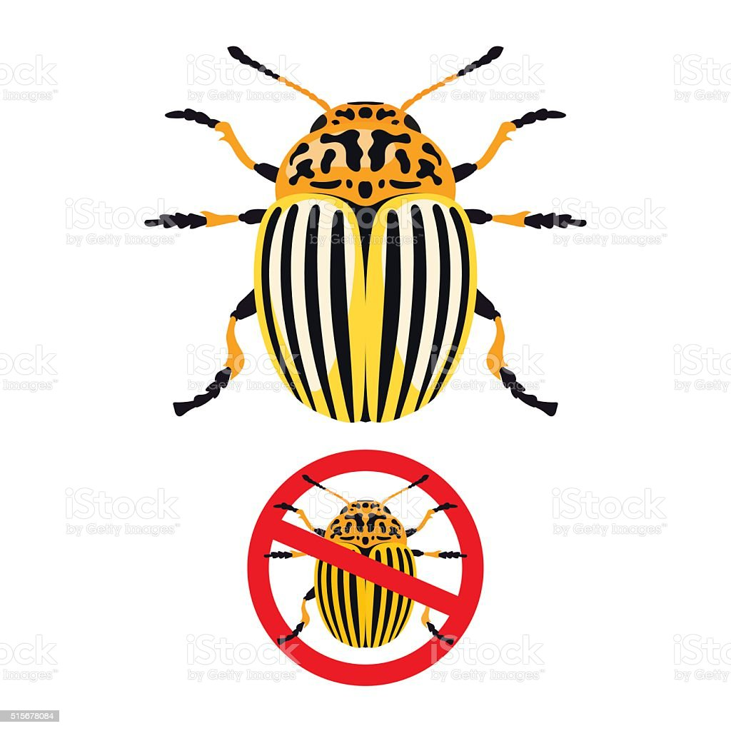 Colorado potato beetle and prohibition sign vector art illustration