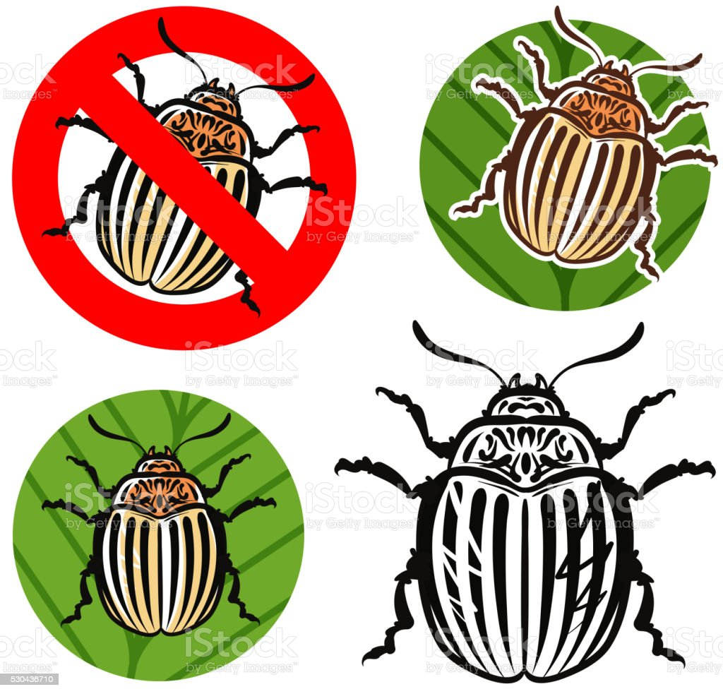 Colorado potato beetle and prohibition sign. vector illustration vector art illustration