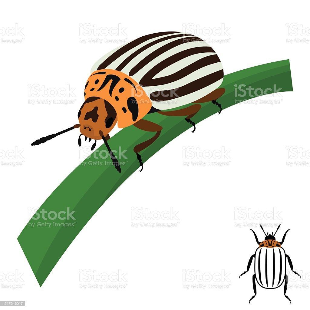Colorado potato beetle sits on a stalk. vector art illustration