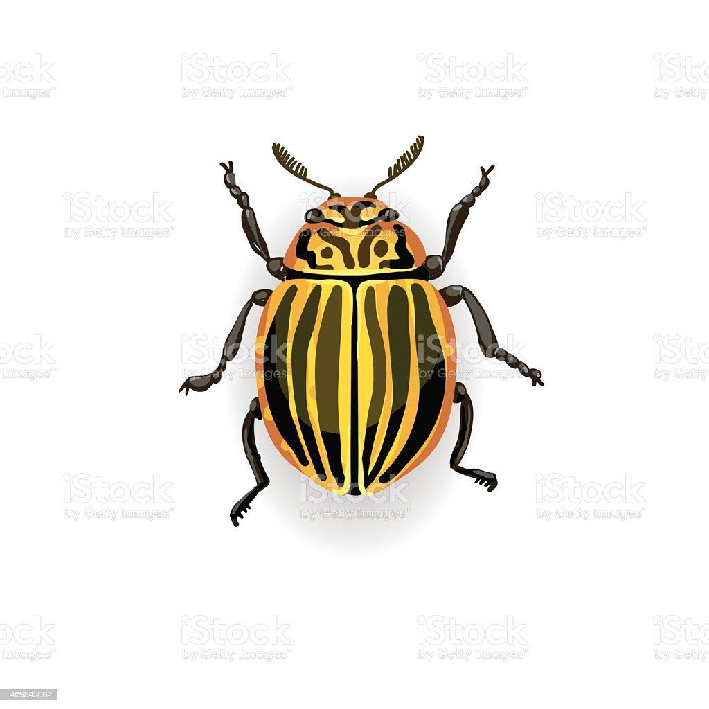 Colorado potato beetle. vector art illustration