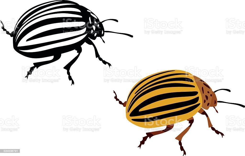 colorado potato beetle - vector illustration vector art illustration