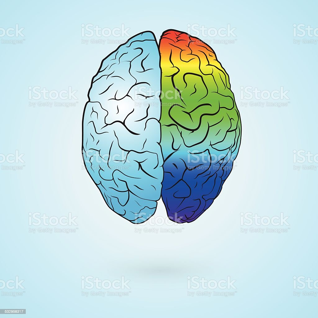 Colored brain vector art illustration