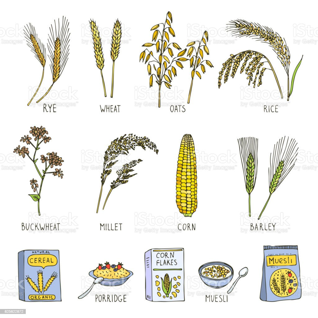 Colored illustrations of cereals. Vector pictures in hand drawn style vector art illustration