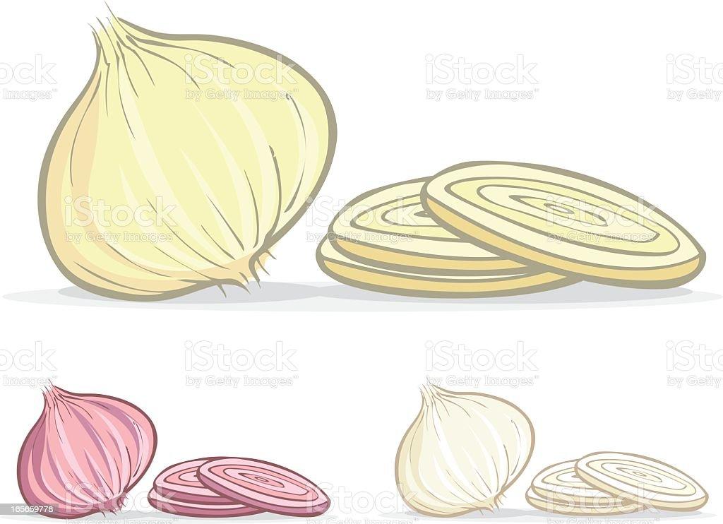 Colored illustrations of onions vector art illustration