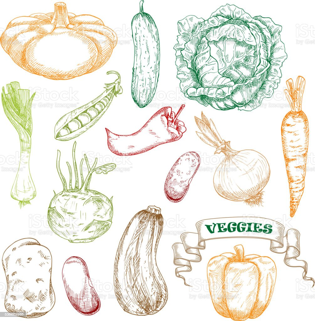 Colored sketched vegetables for agriculture design vector art illustration
