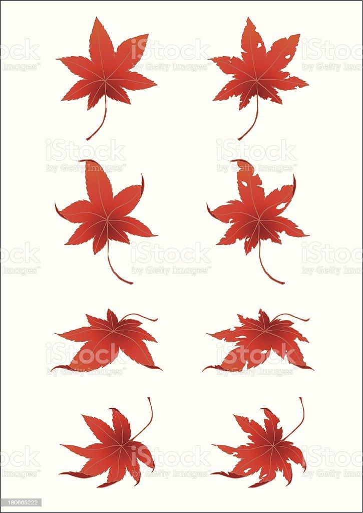 ColoredLeaves_JapaneseMaple vector art illustration