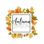 Colorful Autumn Oak Leaves Background. Floral Banner Design in Vector