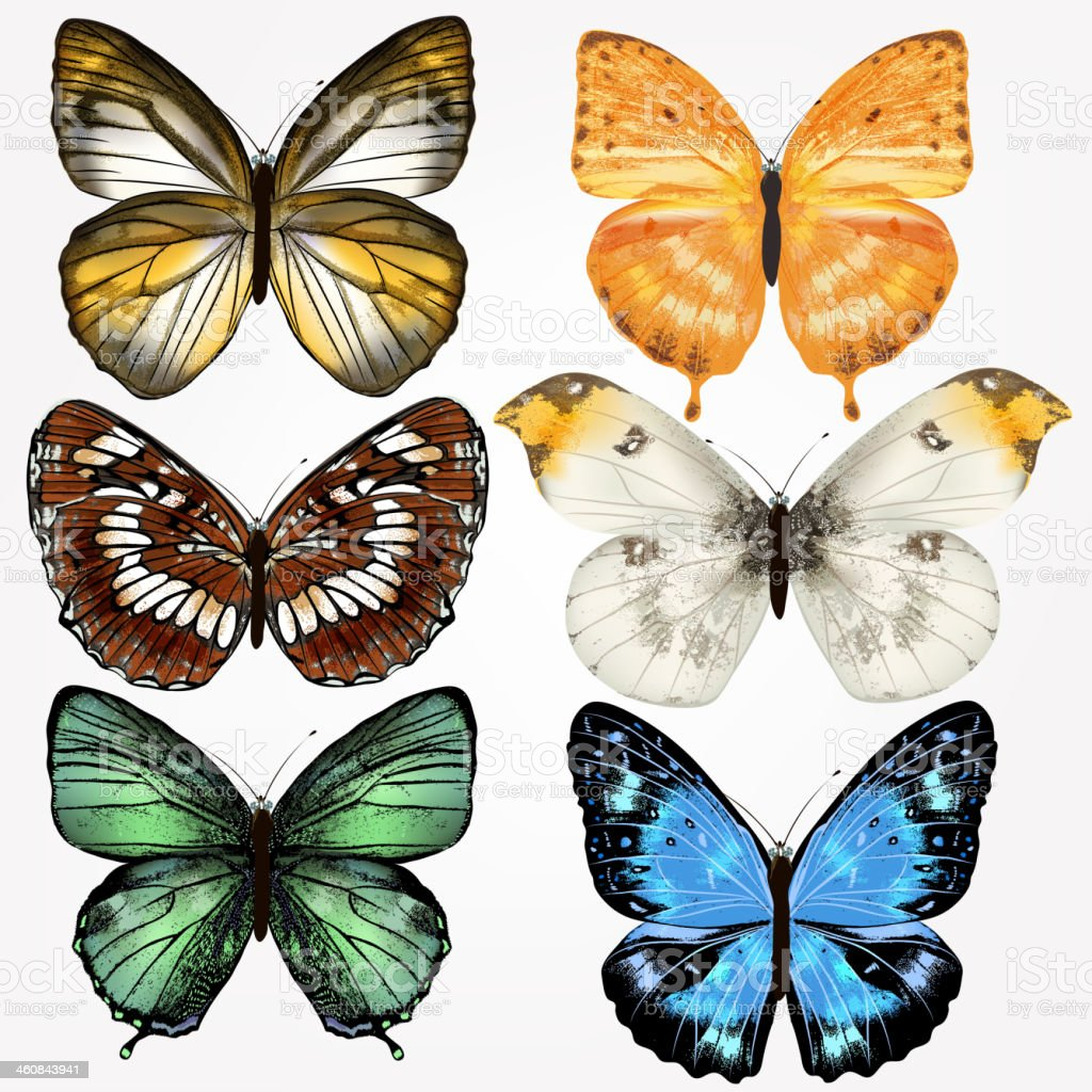 Colorful collection of vector realistic butterflies for design royalty-free stock vector art