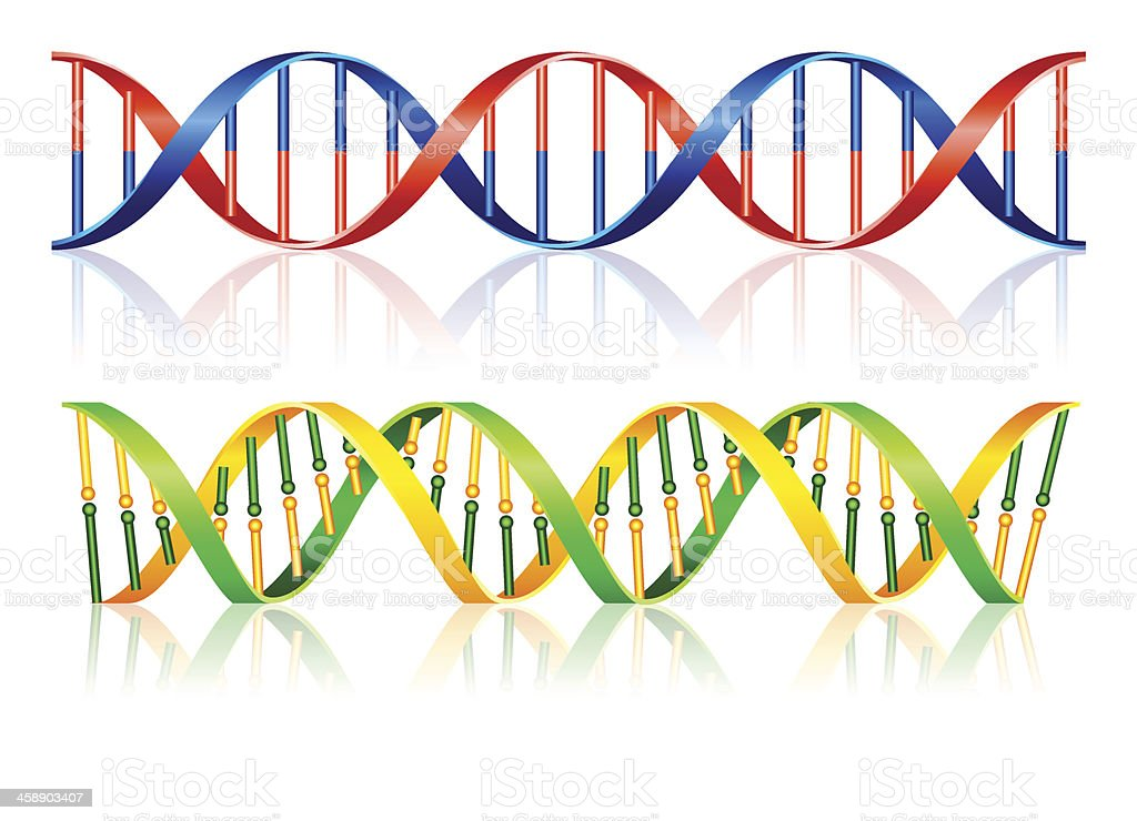 Colorful DNA concept vector with the reflection effect vector art illustration