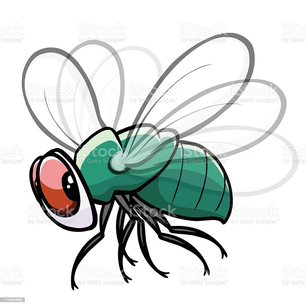 Colorful fly drawing with white background vector art illustration