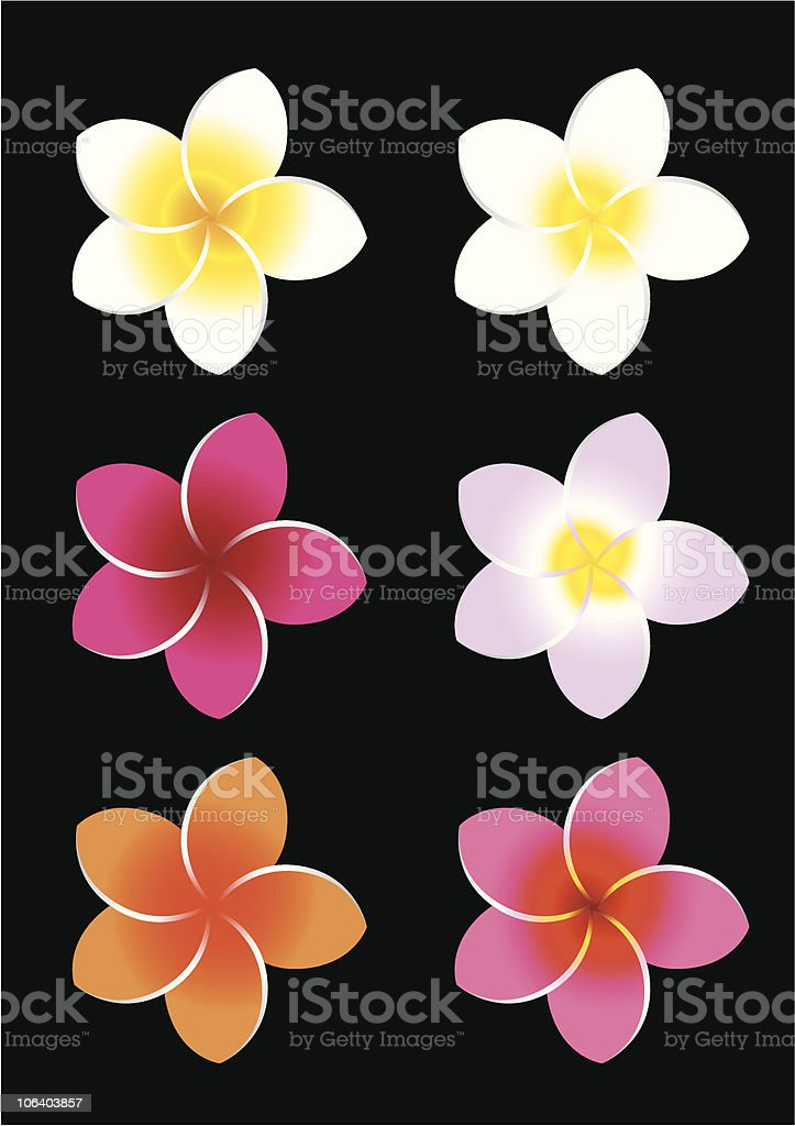 Colorful Frangipani vector art illustration
