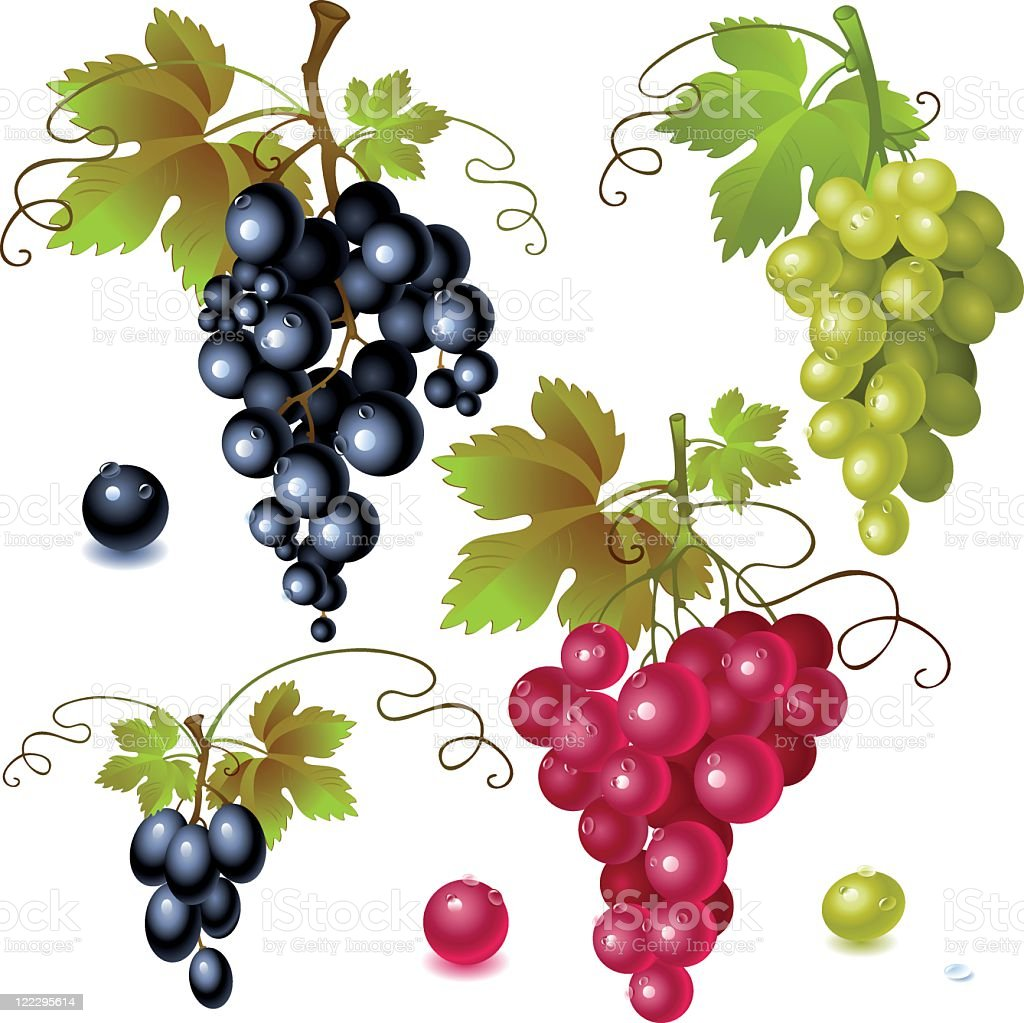 Colorful grapes with vines and leaves vector art illustration