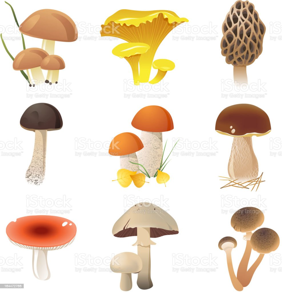 Colorful illustrated edible mushrooms on a white background royalty-free stock vector art