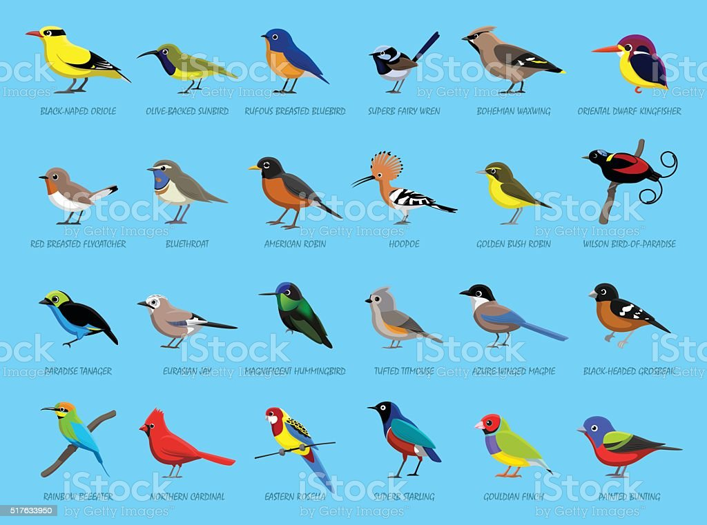 Colorful Little Birds Side View Cartoon Vector Illustration vector art illustration
