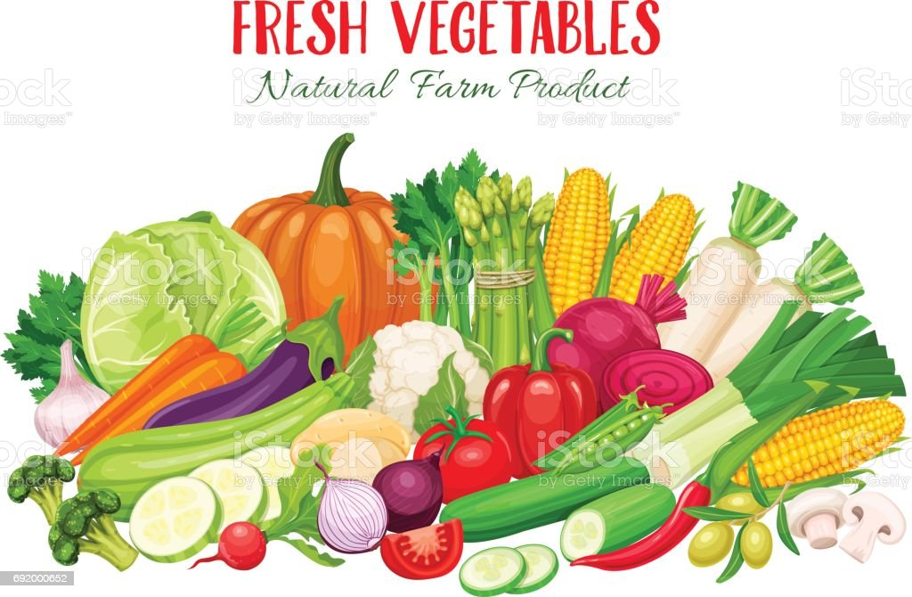 Colorful organic banner with vegetables vector art illustration