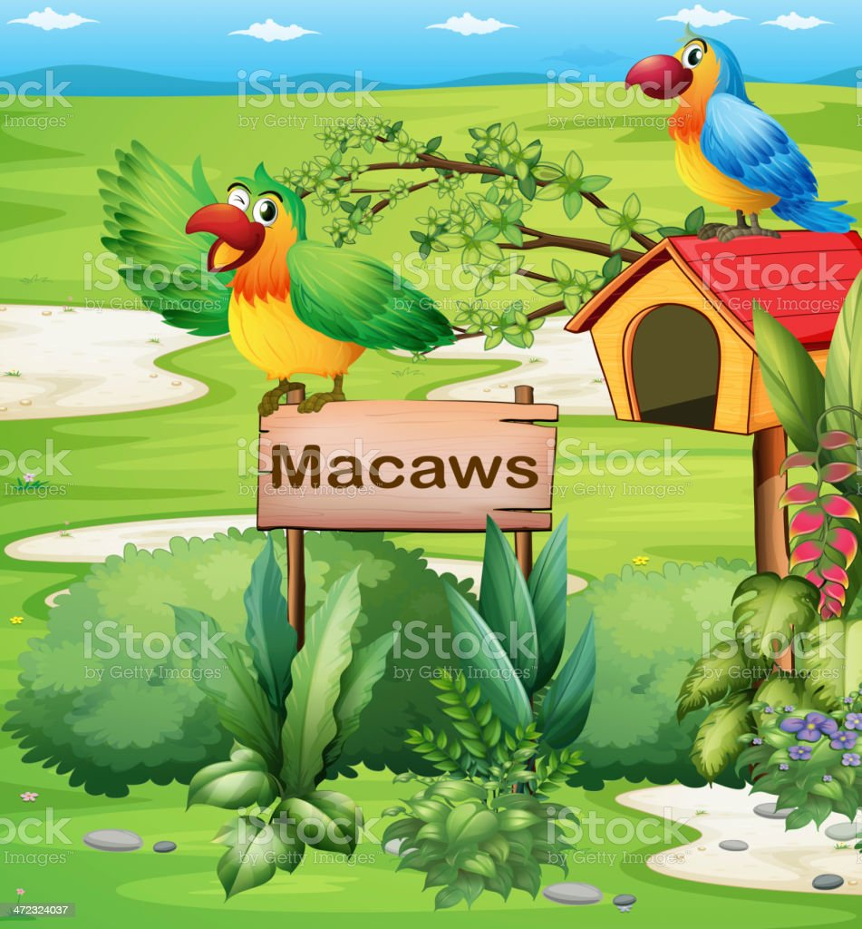 colorful parrots above signboard and a pethouse royalty-free stock vector art