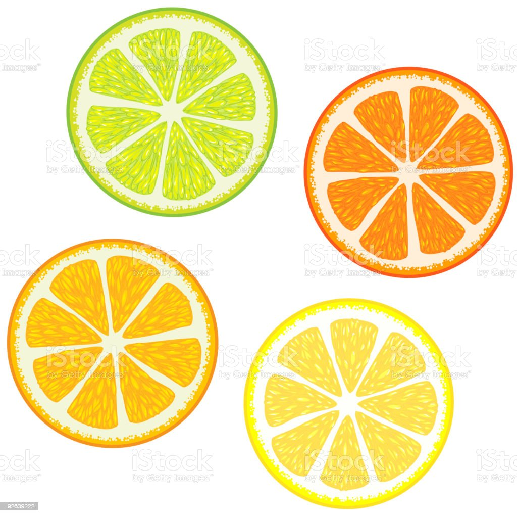 Colorful slices of citrus fruits royalty-free stock vector art