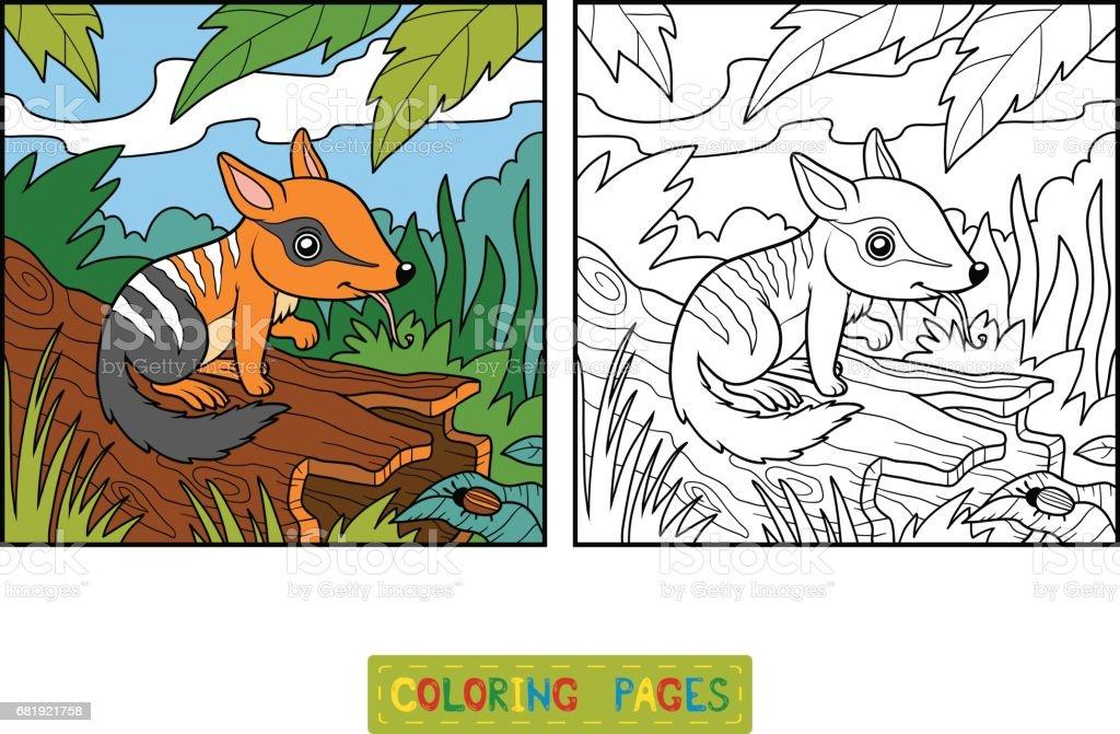 Coloring Book For Children Numbat stock vector art 681921758 iStock