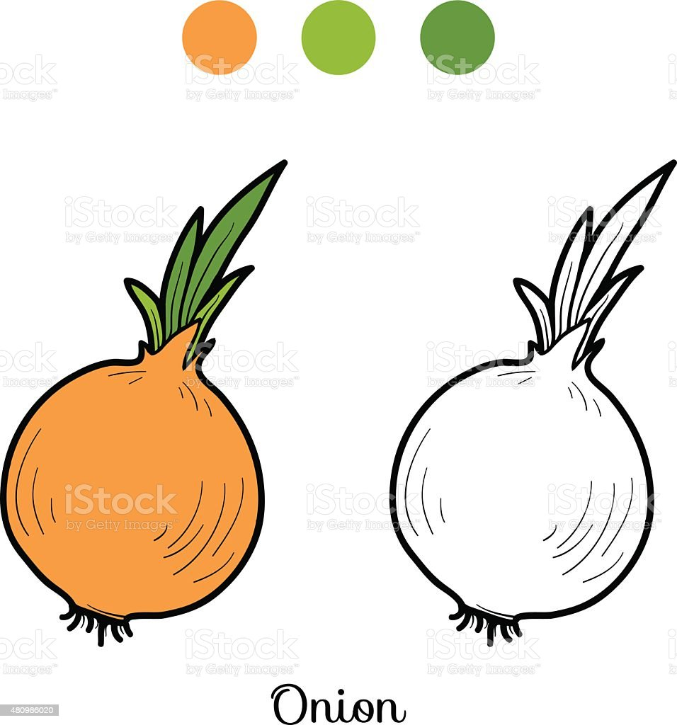Coloring book pictures of vegetables -  Coloring Book Fruits And Vegetables Onion
