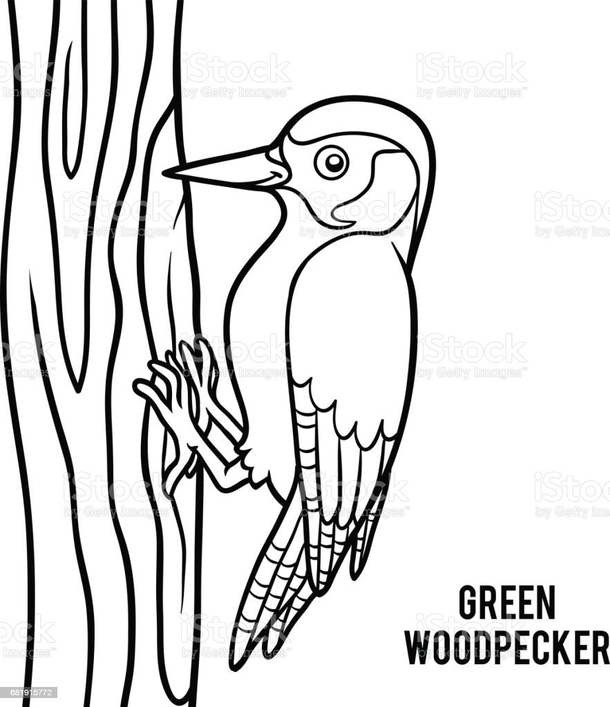 coloring book green woodpecker stock vector art 681915772 istock
