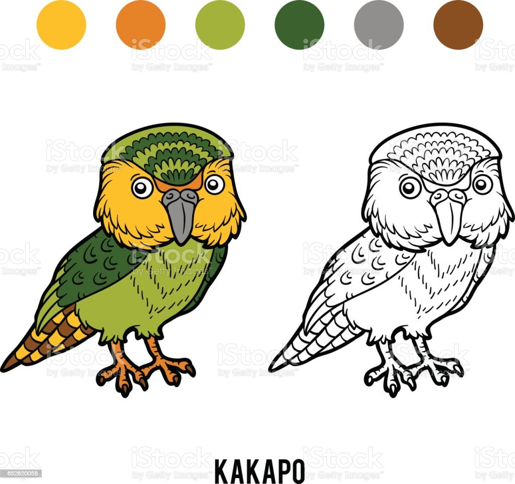 Coloring book, Kakapo parrot vector art illustration