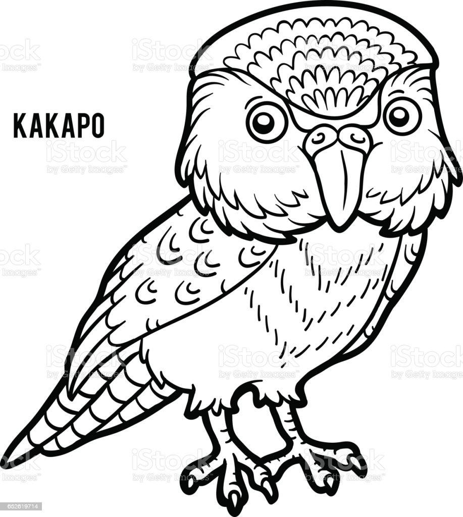 Coloring book, Kakapo vector art illustration