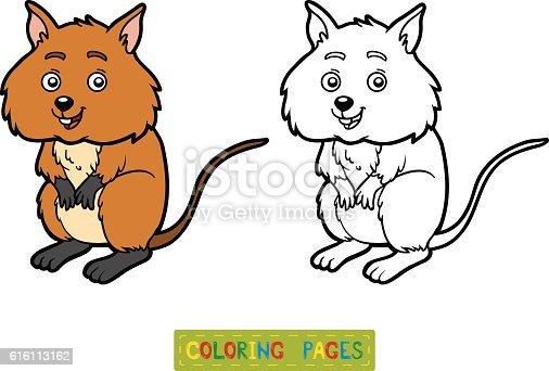 Coloring Book Quokka stock vector art 616113162 iStock