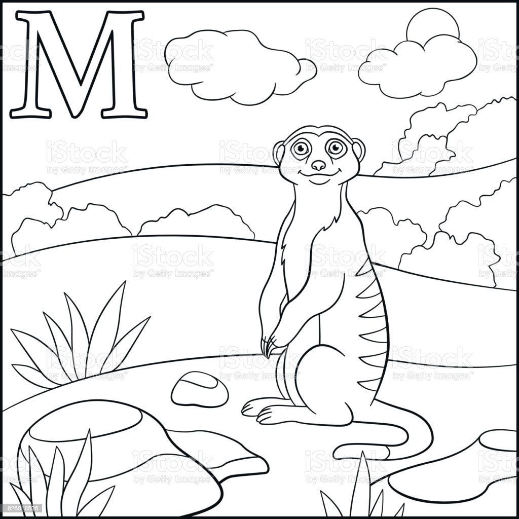 coloring page cartoon animals alphabet m is for meerkat stock