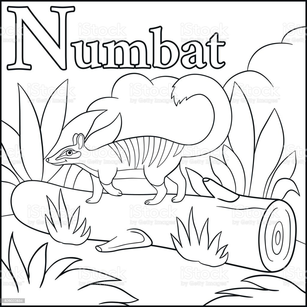 Coloring Page Cartoon Animals Alphabet N Is For Numbat stock