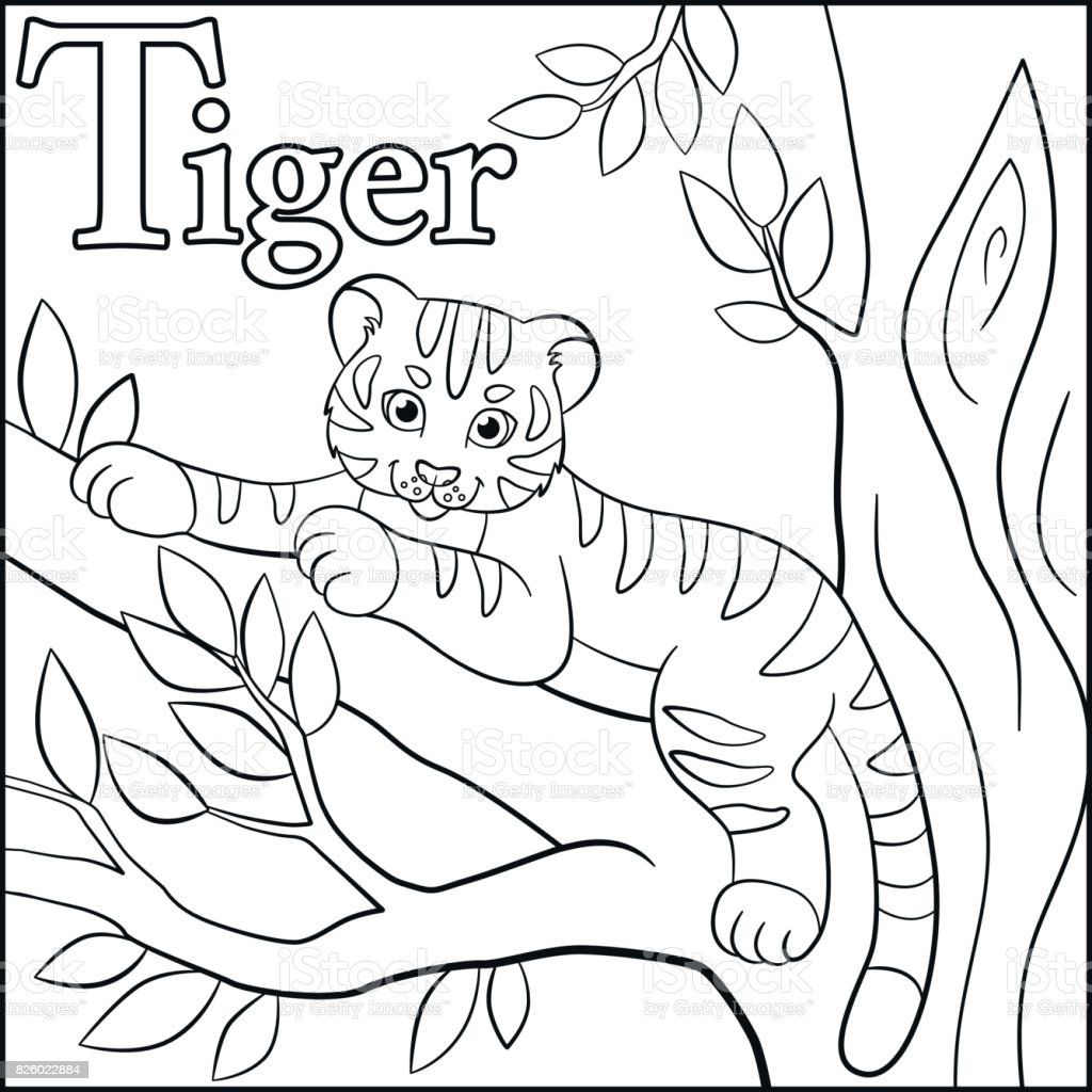 coloring page cartoon animals alphabet t is for tiger stock vector
