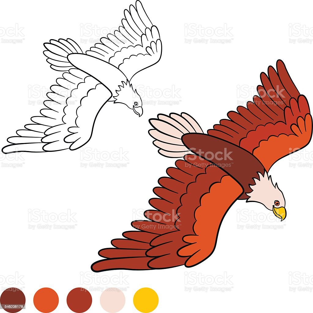 coloring page color me eagle cute bald eagle flying stock vector