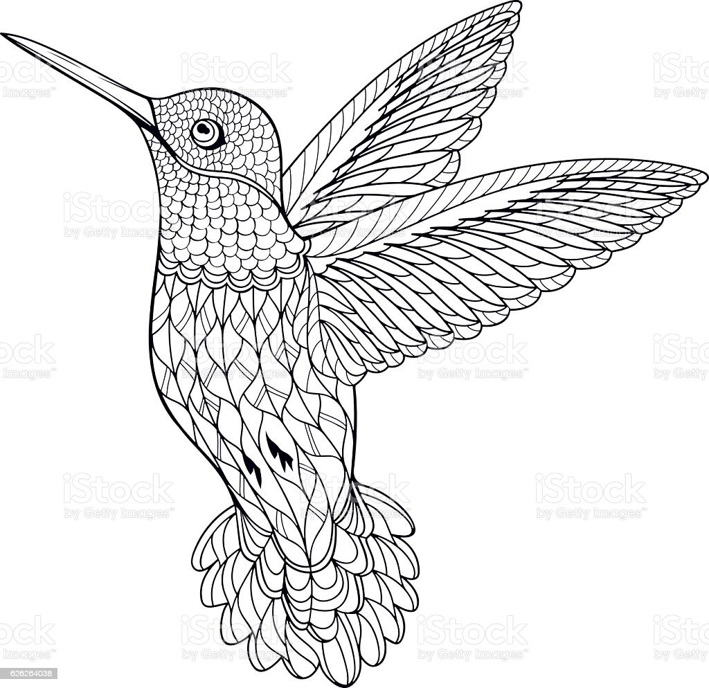Coloring Page Hummingbird vector art illustration