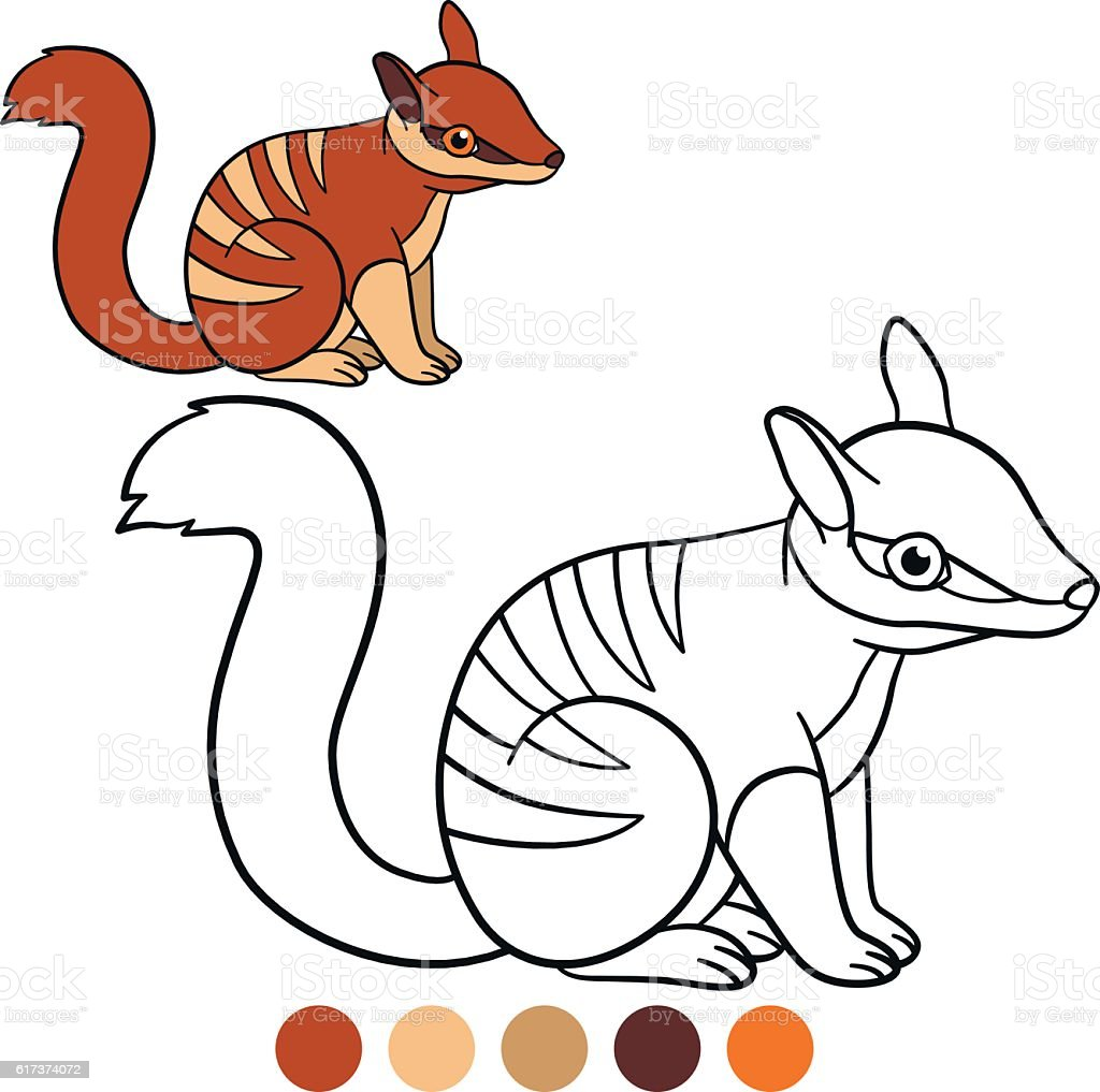 Coloring Page Little Cute Baby Numbat Smile stock vector art