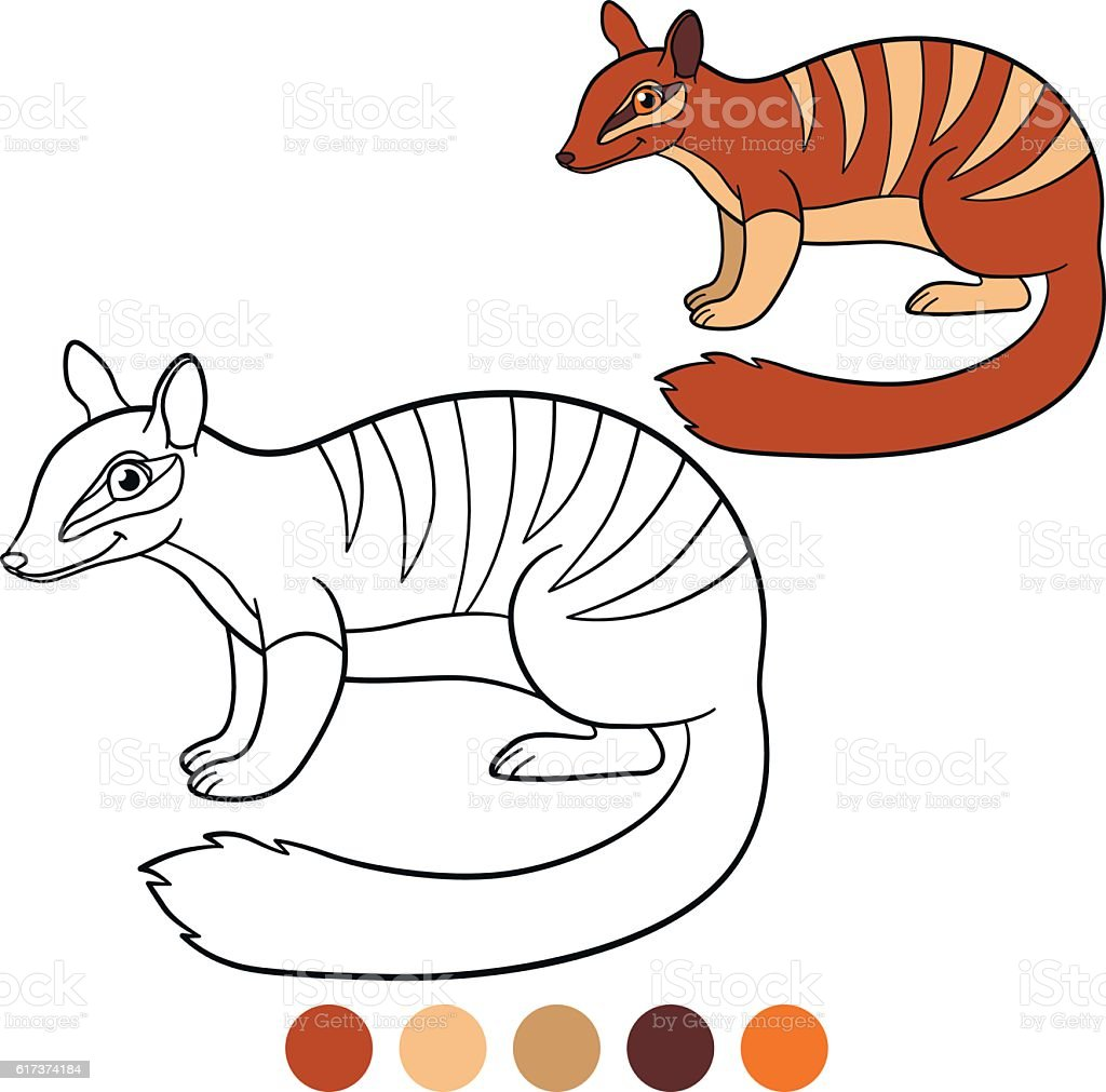 Coloring Page Little Cute Numbat Smile stock vector art 617374184